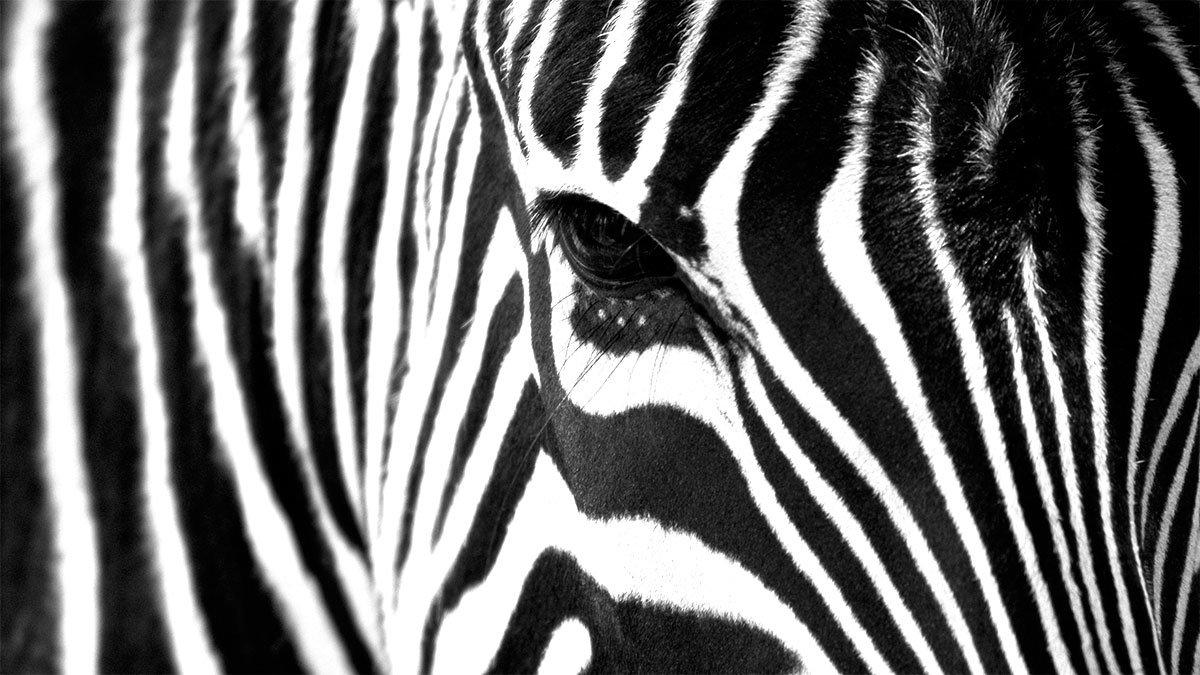 Zebra fashion - Marcas de ropa casual ...